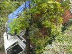 truk-diesel-muatan-ayam-petelur-jatuh-di-sungai-jalan-raya-tuban-surabaya.jpg