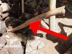 ular-piton-yang-memakan-unggas-ditangkap-oleh-warga-di-desa-senden-kampak-trenggalek.jpg