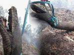 ular-piton-yang-mirip-anaconda-ditemukan-hangus-di-kebakaran-hutan.jpg