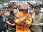 ular-sanca-kembang-dengan-panjang-sekitar-35-meter-berhasil-dievakuasi-dari-kawasan-jalan-indrapura.jpg