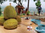 wisata-puncak-ratu-pamekasan-festival-durian.jpg