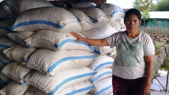 Masuki Musim Penghujan, Segini Harga Garam di Pallengu, Kabupaten Jeneponto