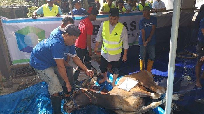 FOTO-FOTO: Regional Panin Bank Kawasan Timur Indonesia Sembelih Hewan Kurban - 16-ekor-sapi-gabungan.jpg