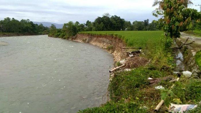 Abrasi Sungai Makawa Luwu Rusak Rumah dan Lahan Persawahan Warga