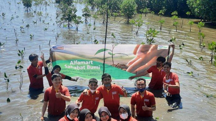 Alfamart Tanam 500 Pohon Mangrove di Ekowisata Lantebung Makassar