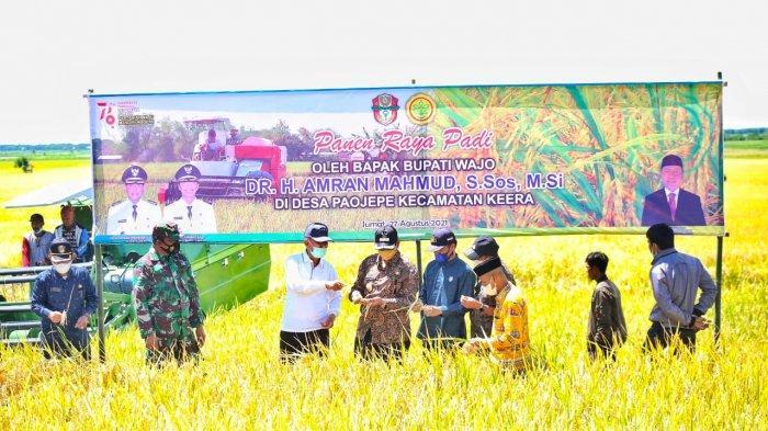 Bupati Wajo Panen Raya di Keera, Sebut Ada 95 Ribu Hektar Padi Siap Panen