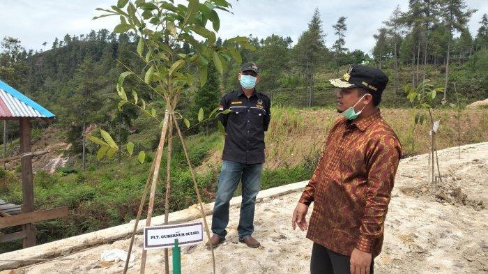 Kondisi Pohon Mahoni di Toraja Airport, Ditanam Andi Sudirman Sebulan Lalu
