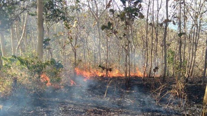 Akibat Puntung Rokok Lahan di Kecamatan Bissappu Bantaeng Terbakar