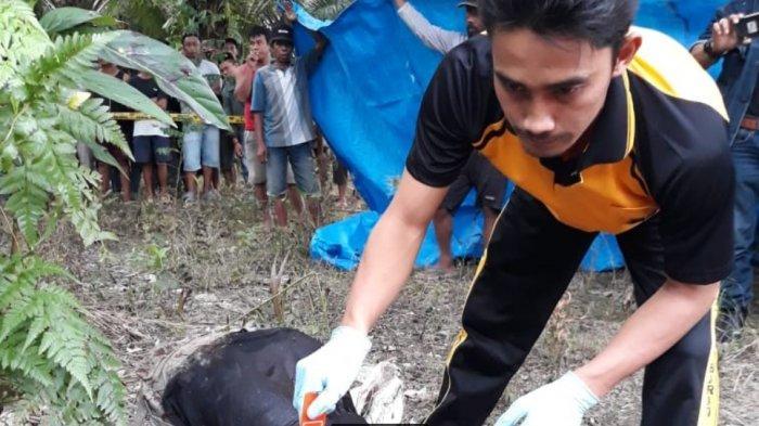 BREAKING NEWS: Warga Baras Pasangkayu Ditemukan Tewas di Kebun Sawit, Kepala Nyaris Putus
