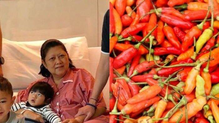 Idap Kanker Darah, Ternyata Ani Yudhoyoni Suka Kantongi Cabai Rawit yang Ampuh Cegah Risiko Kanker