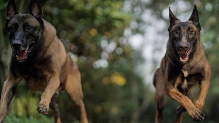 Anjing Berebutan Makan Bangkai, Setelah Diperiksa, Ternyata yang Dimakan adalah Potongan Tubuh Bayi