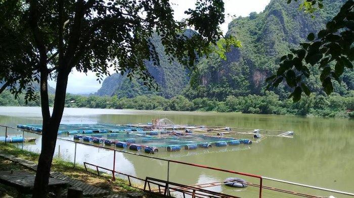PT Semen Tonasa Reklamasi Bekas Tanah Liat jadi Taman Kehati Bulusipong, Hasilkan Ikan Nila 1,4 Ton