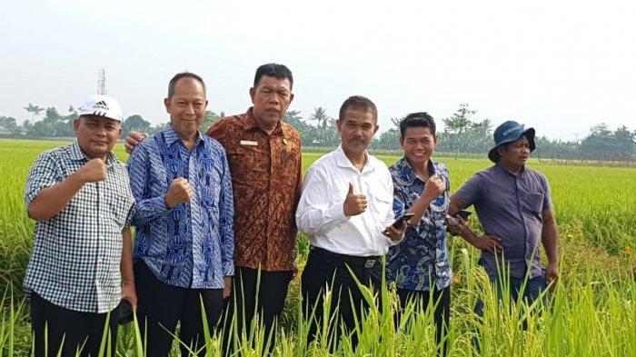 beras-organik-pandanwangi-deli-serdang-laris-manis3.jpg