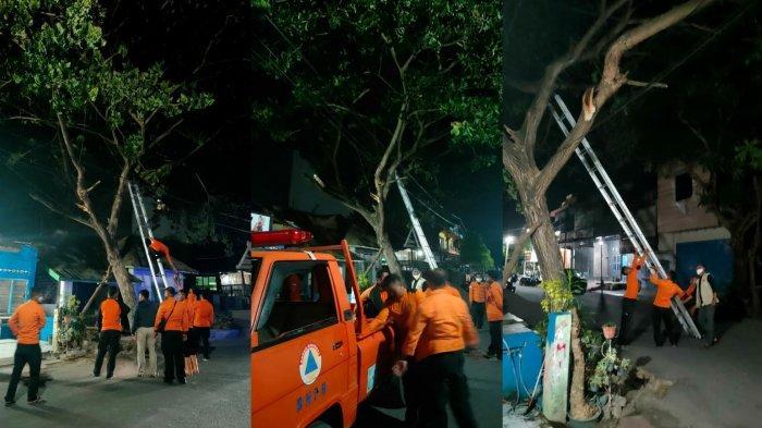 24 Jam BPBD Bulukumba Pangkas Pohon Rawan Tumbang, Legislator Golkar Berikan Apresiasi