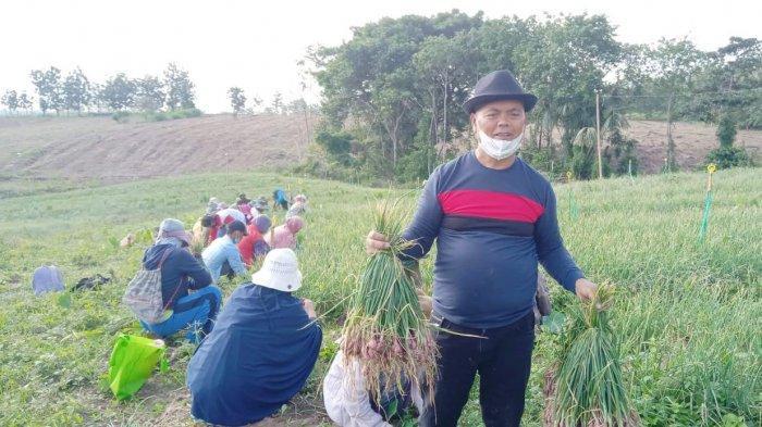 Berkat Bawang Merah dan Jagung, Perekonomian Enrekang Tetap Tumbuh Positif Selama Pandemi