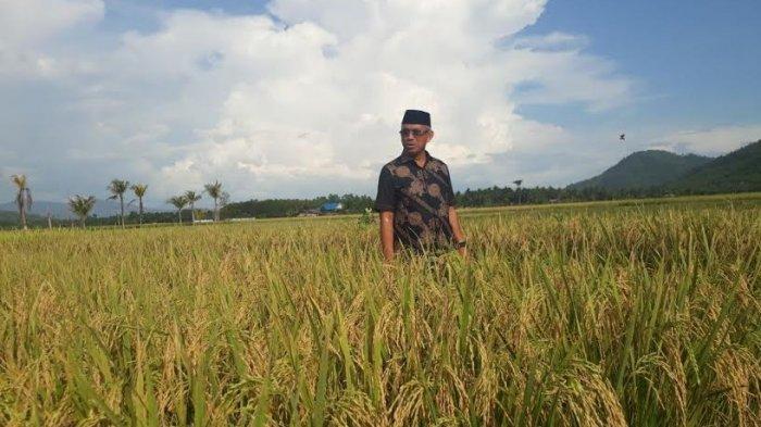 Weekend, Bupati Luwu Timur Sambangi Petani di Angkona