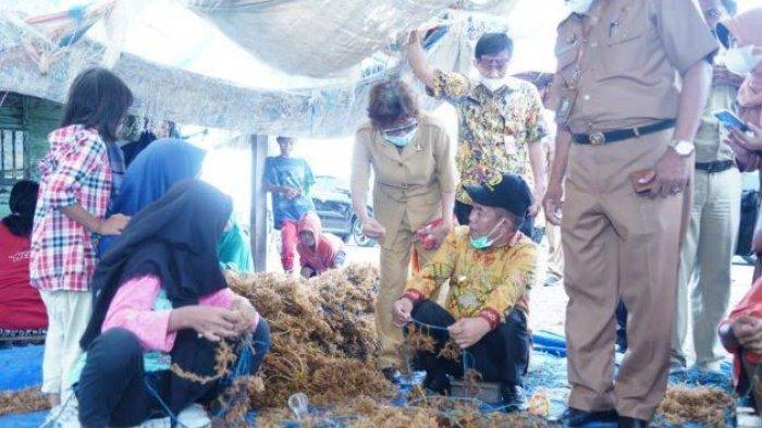 Kunker ke Bantaeng, Bupati Majene Ajak Warganya Budidaya Rumput Laut