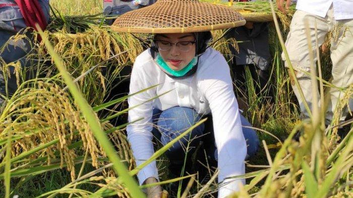 Hari Tani Nasional 2020, Bupati Purwakarta Anne Ratna Mustika Apresiasi Program Terobosan Kementan