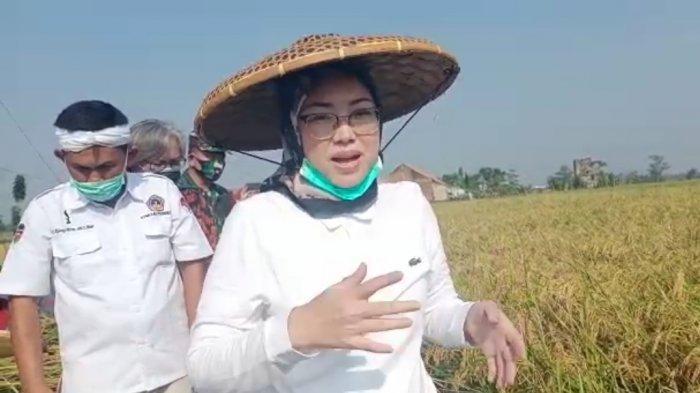 Bupati Purwakarta, Anne Ratna Mustika menggelar Peringatan Hari Tani Nasional Tahun 2020 Tingkat Kabupaten yang dikemas melalui Pencanangan Panen Padi Varietas Tarabas di Kampung Tegal Onder, Purwakarta, Kamis (24/9/2020).