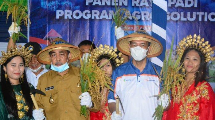 Panen Raya Agro Solution di Desa Timoreng Panua Sidrap Capai 9 Ton Per Hektar