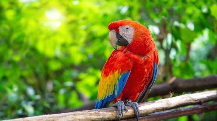 Pelihara Burung Beo Simak 7 Makanan Yang Baik Dimakan Dan 5 Makanan Yang Beracun Untuk Beo Tribun Timur