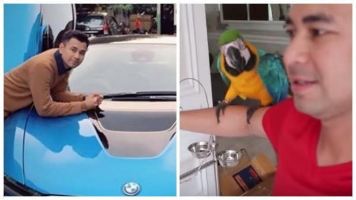 Gak Nyangka Harga Burung Kakatua Raffi Ahmad Seharga Mobil Pemberian Wanita Cantik Ini Halaman All Tribun Timur