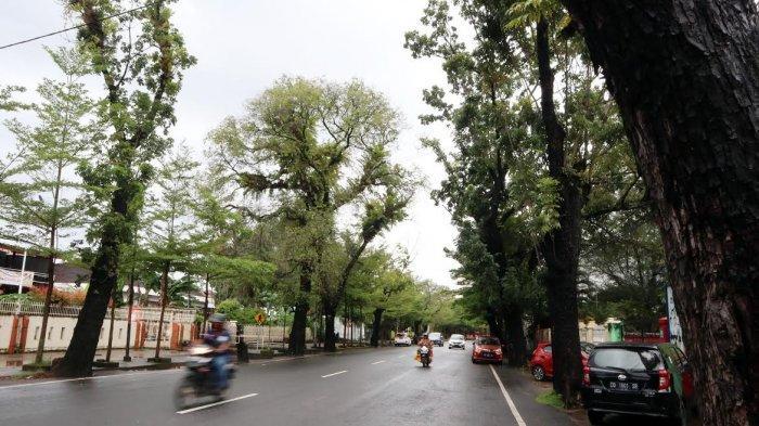 FOTO; Pohon Tua di Jalan Monginsidi Makassar Rawan Tumbang - deretan-pohon-tua-di-jl-monginsidi-makassar-rabu-74-2.jpg