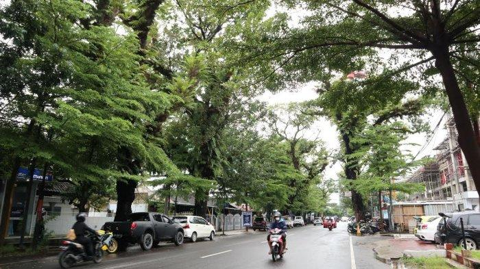 FOTO; Pohon Tua di Jalan Monginsidi Makassar Rawan Tumbang - deretan-pohon-tua-di-jl-monginsidi-makassar-rabu-74-3.jpg