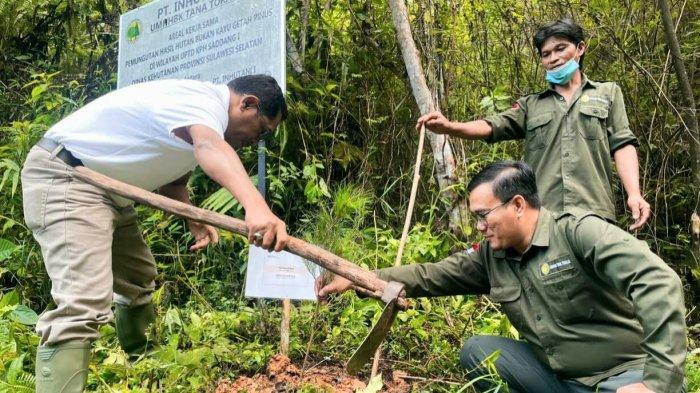 Kembangkan Potensi Getah Pinus, PT Inhutani I Bakal Dirikan Pabrik Gondorukem di Toraja