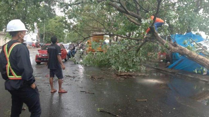 Hujan Deras Disertai Angin Kencang di Gowa, Dua Pohon Tumbang