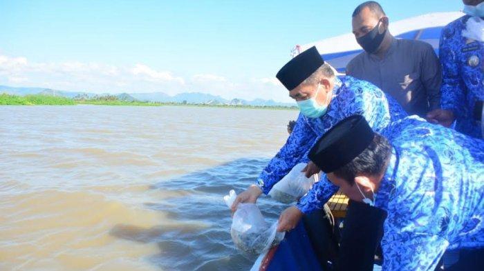 80 Benih Ikan Mas dan Nila Dilepas di Danau Sidenreng Sidrap