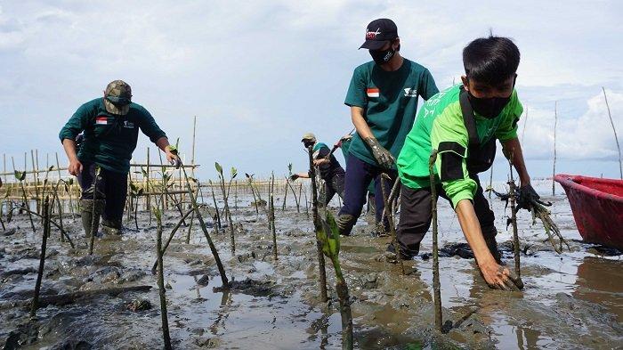 Hari Menanam Pohon Indonesia, Dompet Dhuafa Tanam 1.000 Mangrove di Lantebung