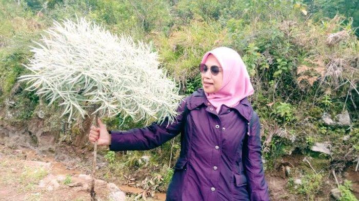 Emak-emak di Ujungbulu Jeneponto Nekat Naik Gunung Cari Bunga