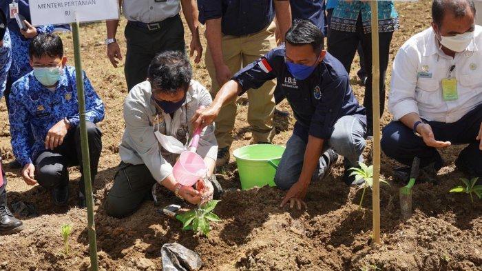 Syaharuddin Alrif Dampingi Menteri Pertanian SYL Tanam Perdana Porang di Pangkep