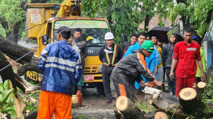 35 Pohon Tumbang dan 4 Rumah Rusak di Gowa