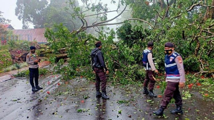 Hujan Deras Disertai Angin Kencang, Pohon Tumbang Tutup Akses Jalan di Malino Gowa
