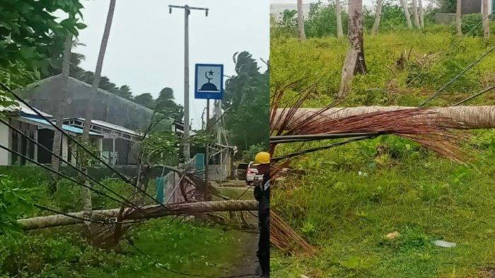 Pohon Kelapa Timpa Jaringan PLN, Listrik Padam di Selayar