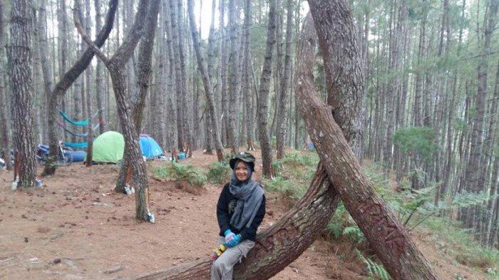 Sensasi Camping di Hutan Pinus Baredok Enrekang, Dingin Kayak di Gunung Es - hutan-pinus-enrekang_20170423_155153.jpg