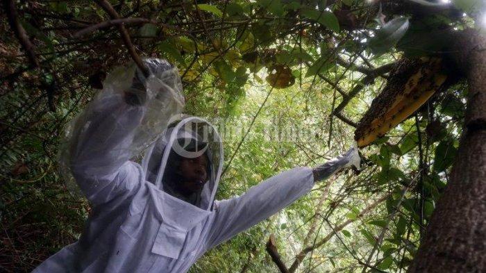 FOTO; Panen Lestari Madu Hutan di Cindakko Maros - ilmi-sulsel-melakukan-pendampingan-kepada-warga-dalam-mengelola-madu-hutan-di-dusun-cindakko-4.jpg