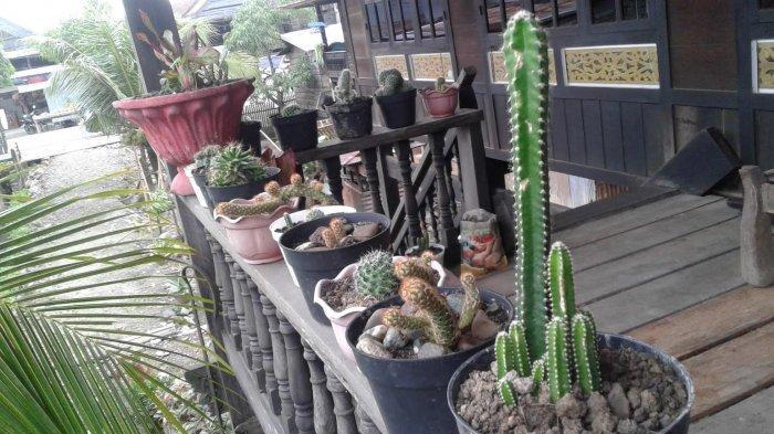 Ciri-Ciri Tanaman Kaktus, dari Batang Hingga Akar