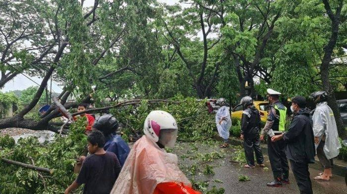 Ada Pohon Tumbang, Jalan Poros Gowa-Takalar di Bontonompo Macet