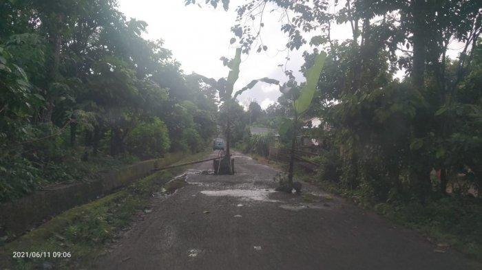 Warga Bonto-bontoa Bantaeng Tanam Pohon Pisang di Tengah Jalan