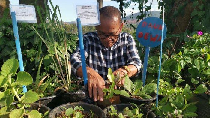 Daftar Tanaman Herbal yang Bisa untuk Bersihkan Rumah