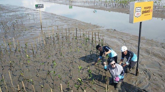BPDASHL Jeneberang dan SOSBOFI Aksi Tanam Mangrove di Lantebung