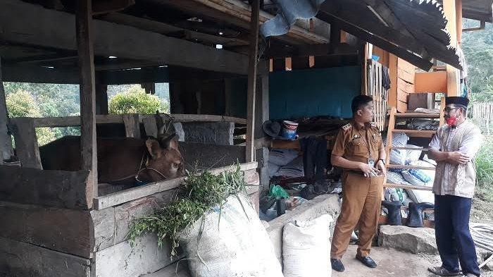 Sinjai Bakal Bangun Sentra Industri Peternakan di Gareccing