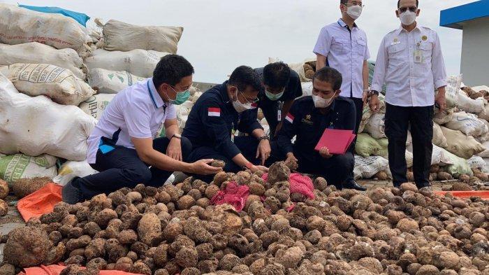 Pengamat: Tidak Ada Kata Gagal, Mentan SYL Moncer Bangun Pertanian