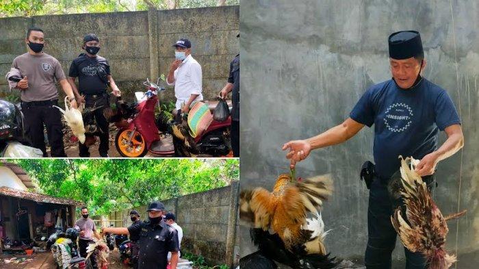 Gerebek Lokasi Judi Sabung Ayam Komplek Bukti Baruga Makassar, Polisi Amankan Dua Bangkai Ayam