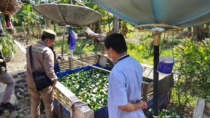 Tingkatkan Asupan Gizi Masyarakat Luwu, Yayasan Kalla Lanjutkan Program Kolam Ikan Air Tawar