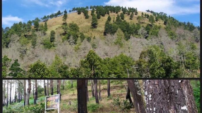 Banyak Pohon Mati Terbakar di Kawasan Hutan Bantaeng, Warga Minta Penyadapan Getah Pinus Dihentikan