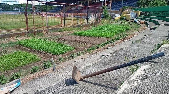 Liga 1 Dihentikan, Bece 'Sulap' Stadion Mattoanging Markas PSM Makassar Jadi Kebun Sayur - kondisi-stadion-mattoanging-makassar-yang-beralih-fungsi-jadi-kebun-2252020.jpg